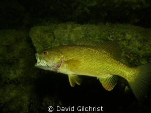 Test shots with Canon s 100 in a local quarry, Bass yawning. by David Gilchrist