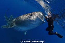 Highest level of underwater photography by Wilfried Niedermayr