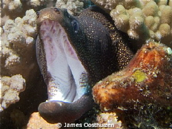 Moray getting angry with the camera by James Oosthuizen