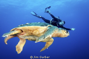 Deb really likes turtles by Jim Garber