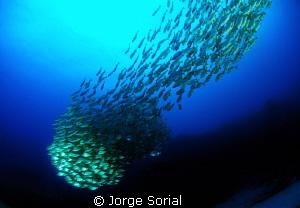 Underwater comet by Jorge Sorial