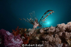 Taken on an early morning dive on the Thistlegorm, used a... by Robert Bagdi