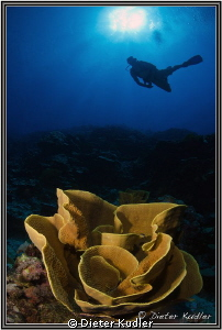 Diving Big Bend, Yap Island by Dieter Kudler