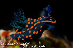 nudibranch d700 f10,1/320 by Eduardo Nadal
