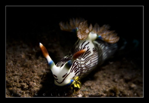 Nudibranch by John Clifford