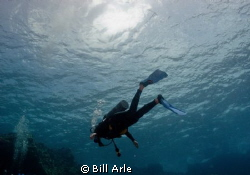 Nice, clear dive conditions. Big Island, Hawaii. by Bill Arle