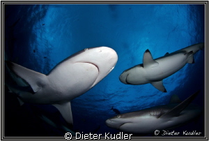 Friends by Dieter Kudler