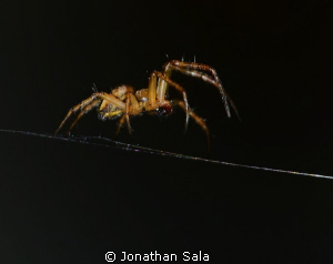 on the beach... little lovely spider....  105mm/F32/1-125 by Jonathan Sala