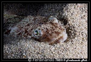 Hidden in the sand waiting to strike... by Ferdinando Meli