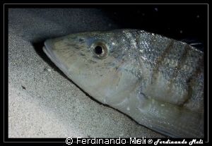 Fish sleeping... by Ferdinando Meli