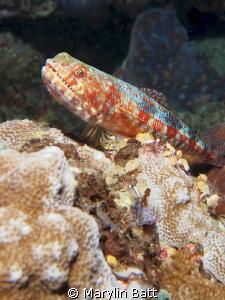 Lizzard Fish by Marylin Batt