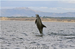 Jump for Joy/ Shot in the Monterey Bay. Nikon D300 with t... by Craig Dietrich