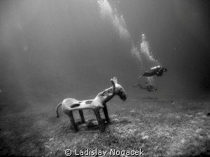 Horse atraction B&W by Ladislav Nogacek