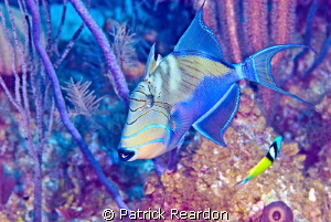Trigger fish with a tone mapped filter. by Patrick Reardon