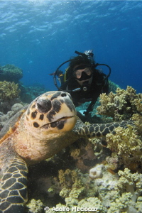 Hawksbill & Diver Jackson reef  by Adolfo Maciocco