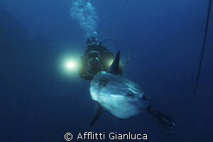 DIVER AND MOLA MOLA by Afflitti Gianluca