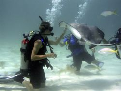 Mike and his stingray Stingray City Grand Cayman Island 2... by Steven Pahel