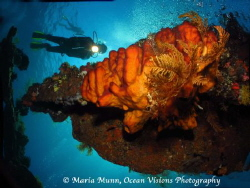 The Liberty Wreck is truly an underwater photographer's p... by Maria Munn