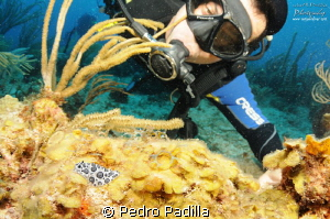 Nudibranch and Joel.  This photo was takes with my 10-17 ... by Pedro Padilla