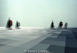 regata by Sergio Loppel