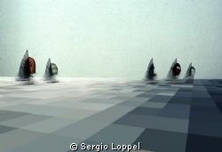 regata by Sergio Loppel
