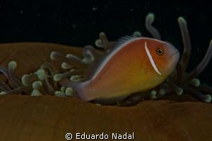 f16, 1/200, 105 mm clownfish by Eduardo Nadal