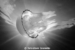 Eclissi by Salvatore Ianniello