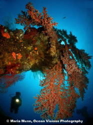This is another image taken at the Liberty wreck.  I just... by Maria Munn
