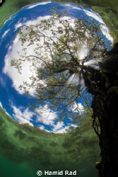 The Passage in Raja Ampat. A tree growing in shallow wate... by Hamid Rad