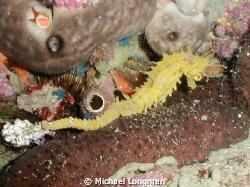 I was guiding a diver around the coastline of Marina Del ... by Michael Longman