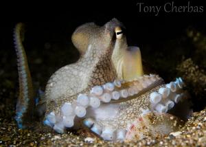 Dr. Octopus, I presume... by Tony Cherbas