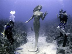 Mermaid and friends Sunset House Grand Cayman Island. Oly... by Steven Pahel