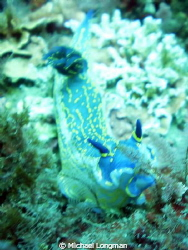 This is a 6 inch Giant Doris I encountered whilst drift d... by Michael Longman