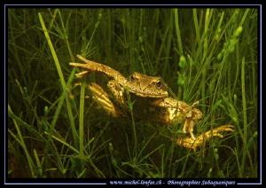 A happy Frog... :O).... by Michel Lonfat