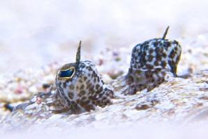 Eye of the Flounder by Kjeld Friis