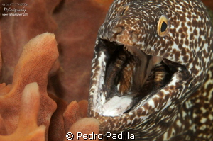 Spotted Ell smile! by Pedro Padilla