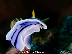 nudibranch by Nadia Chiesi