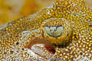 Lemon ray eye; macro. by Patrick Reardon