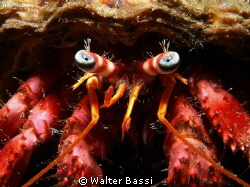 Eyes  by Walter Bassi