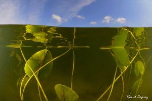 Green vs Blue by Raoul Caprez