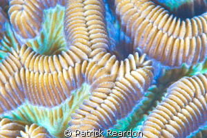 SubSea 10X super macro of brain coral. by Patrick Reardon
