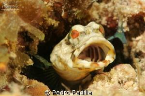 Big Mouth by Pedro Padilla