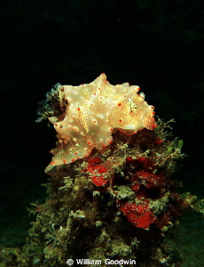 On top of the world! Lembeh Strait. by William Goodwin