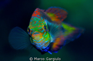 look me by Marco Gargiulo