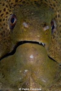 Mooray closeup by Pietro Cremone