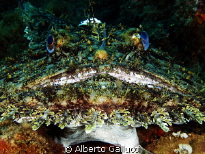 Beauty is subjective by Alberto Gallucci