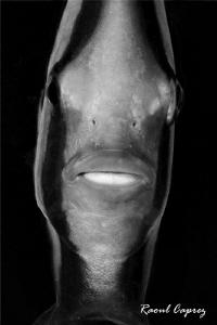 B&W Mask by Raoul Caprez