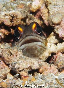 Bright eyed jaw fish by Marylin Batt