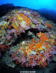 Corallium rubrum by Salvatore Ianniello