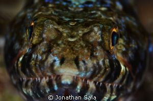 lizard fish... portrait by Jonathan Sala